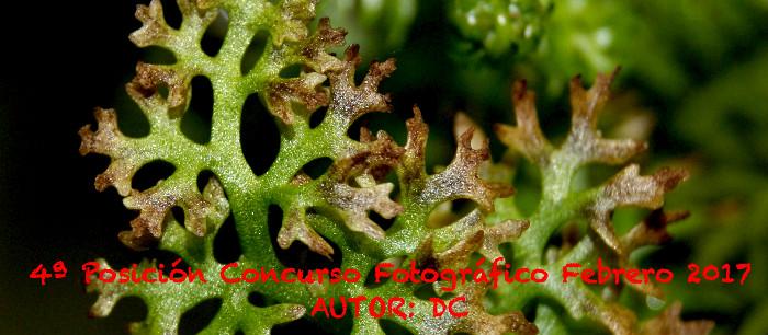 Visita nuestro Atlas de plantas, pincha aquí.